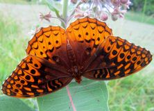 Bästa sikt av en fjäril arkivbilder