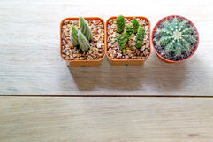 Bästa sikt av en kaktus Royaltyfri Foto