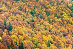 Bästa sikt av färgrika skogträd i hösten Arkivfoto