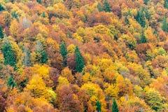 Bästa sikt av färgrika skogträd i hösten Arkivfoton