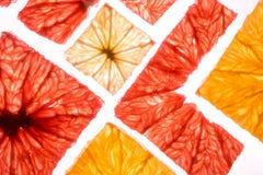 Bästa sikt av fyrkantiga skivor för stordia av den nya citronen och apelsinen för citrusfruktgrapefruktlimefrukt arkivfoton