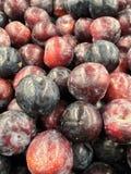 Bästa sikt av högen av nya organiska röda och purpurfärgade plommoner Royaltyfri Bild