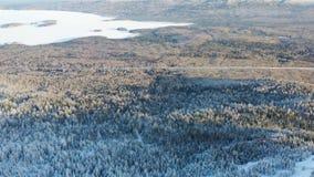 Bästa sikt av högländer med barrskogen i vinter footage Härlig panorama av snö-täckt tätt barrträds- royaltyfri fotografi