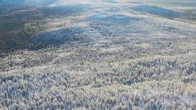 Bästa sikt av högländer med barrskogen i vinter footage Härlig panorama av snö-täckt tätt barrträds- royaltyfria foton