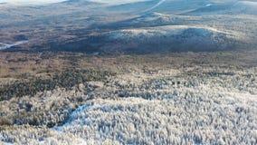 Bästa sikt av högländer med barrskogen i vinter footage Härlig panorama av snö-täckt tätt barrträds- arkivbilder