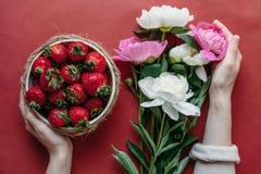 Bästa sikt av jordgubbar i bunke på röd bakgrundsbukett av pioner Royaltyfri Bild