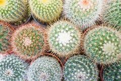 Bästa sikt av kaktuns och suckulenter Royaltyfri Fotografi