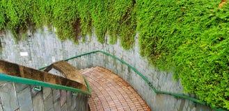 Bästa sikt av nedgången trappuppgången med den gröna rostfritt stålräcket och den härliga gröna vinranka- eller rankaväxten på vä royaltyfri fotografi