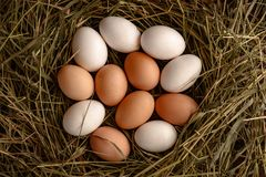 Bästa sikt av nya ägg som är vita och som är bruna på sugrör fotografering för bildbyråer