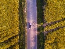 Bästa sikt av personen med cykeln på vägen royaltyfria foton