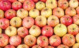 Bästa sikt av röda äpplen som ligger i rader Royaltyfri Bild