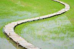 Bästa sikt av risfältet med att gå bron arkivfoto