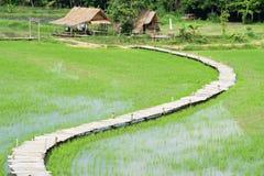 Bästa sikt av risfältet och kojan i Thailand arkivfoto