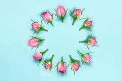 Bästa sikt av rosa rosor som är ordnade i cirkel över blå bakgrund blom- abstrakt bakgrund Arkivfoto