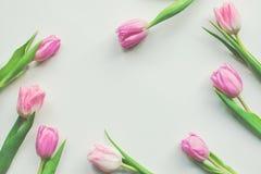 Bästa sikt av rosa tulpan för första vår på vit bakgrund med kopieringsutrymme Härlig vårbakgrund för internationella kvinnors da Royaltyfri Foto