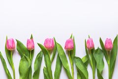Bästa sikt av rosa tulpan som är ordnade i linje över vit bakgrund kopiera avstånd Arkivbild