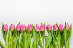 Bästa sikt av rosa tulpan som är ordnade i linje över vit bakgrund kopiera avstånd Fotografering för Bildbyråer