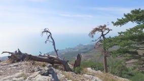 Bästa sikt av staden vid havet till och med träd skjutit Härlig havssikt på en solig sommardag lager videofilmer