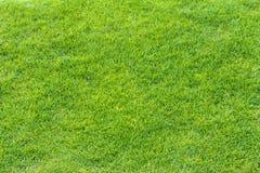Bästa sikt av textur för grönt gräs Royaltyfri Bild