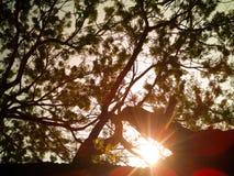 Bästa sikt av trädet med solsken Fotografering för Bildbyråer