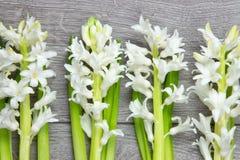 Bästa sikt av vita hyacintblommor arkivbilder