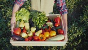 Bästa sikt: Bonden rymmer en träask med en uppsättning av olika grönsaker Organiskt lantbruk och gårdsprodukter arkivbilder