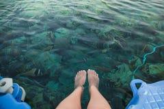 Bästa sikt för Closeup av kvinnliga pedicured ben under blått vatten för kristall arkivfoton