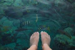 Bästa sikt för Closeup av kvinnliga pedicured ben under blått vatten för kristall fotografering för bildbyråer