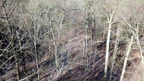 Bästa sikt för flyg- surr av en vinter för skog mitt i utan snö stock video