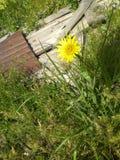 Bästa sikt för gul blomma royaltyfria foton