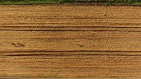 Bästa sikt för moget korn Fältet av korn stock video
