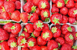 Bästa sikt för packar av saftiga jordgubbar Arkivbild