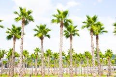 Bästa sikt för palmträd Arkivfoto