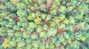 Bästa sikt för skog Arkivbilder