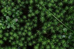 Bästa sikt för skogmossatextur av generalplanen Arkivfoto