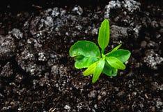 Bästa sikt för växt Royaltyfri Bild