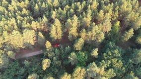 Bästa sikt från surret till lastbilen för röd brand som kör längs vägen i en pinjeskog stock video