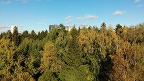 bästa sikt på ekologiskt rent område av Moskva med höstskogen Ryssland lager videofilmer