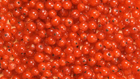 BÄSTA SIKT: Redcurrantbär Royaltyfri Foto