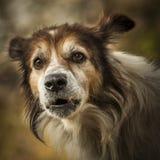 Bästa vän-hund royaltyfri fotografi