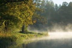 Bäume über ruhigem nebeligem Wasser Stockbilder