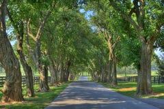 Bäume über schattigem Weg Stockbild