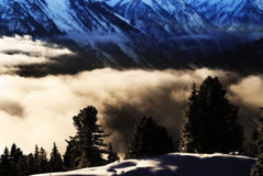 Bäume über Wolken Lizenzfreie Stockfotos