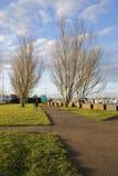 Bäume 1 Lizenzfreies Stockfoto