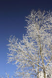 Bäume 10 Lizenzfreies Stockfoto