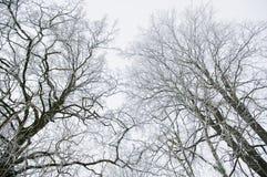 Bäume. Stockbild