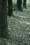 Bäume lizenzfreies stockfoto