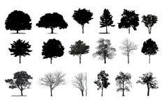 Bäume stock abbildung