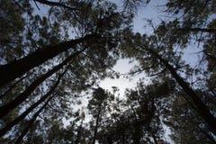 Bäume Stockbild