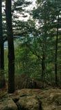 Bäume 2 Lizenzfreie Stockfotos